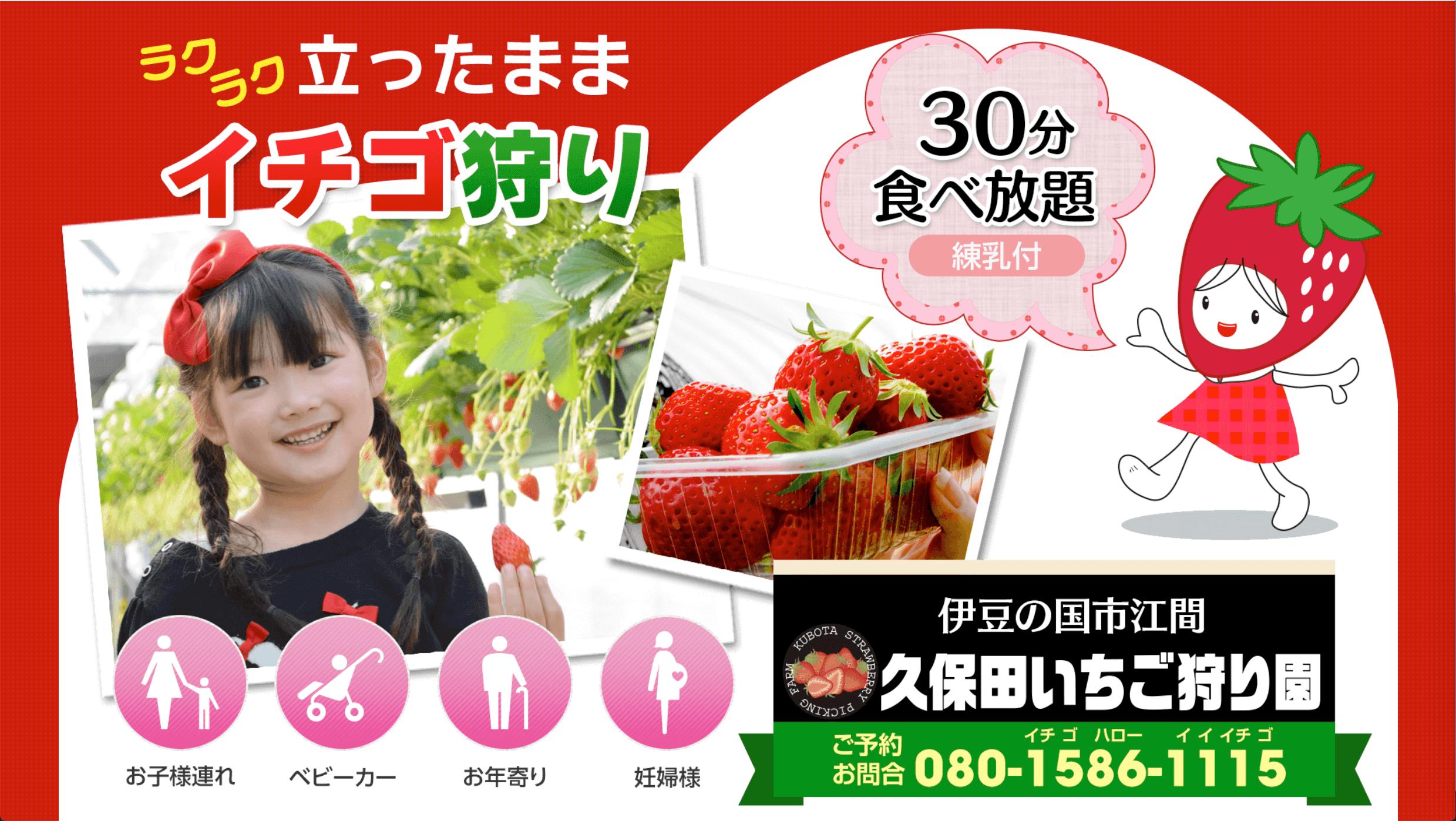 久保田いちご狩り園のイチゴ狩り
