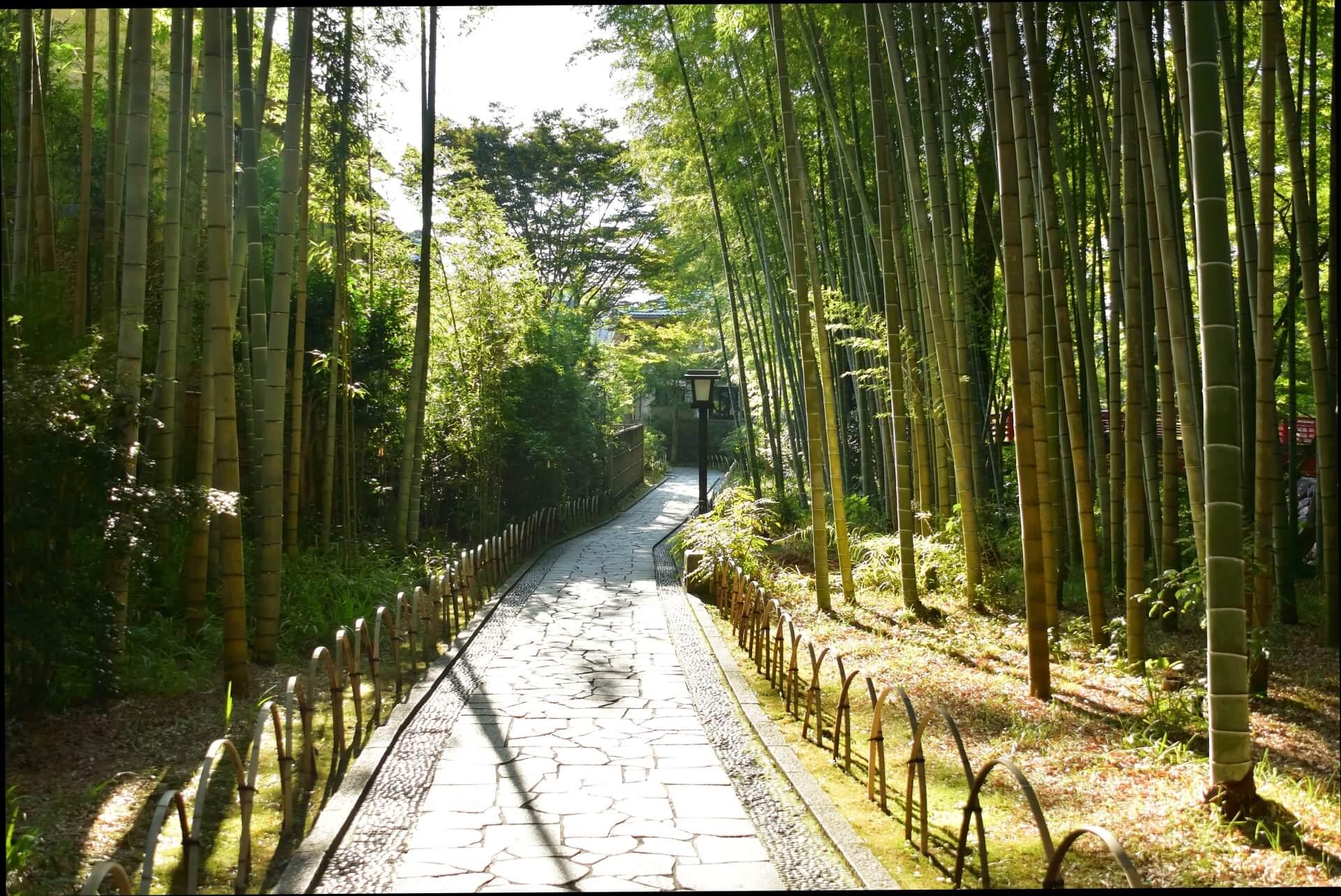 中伊豆(修善寺)の竹林