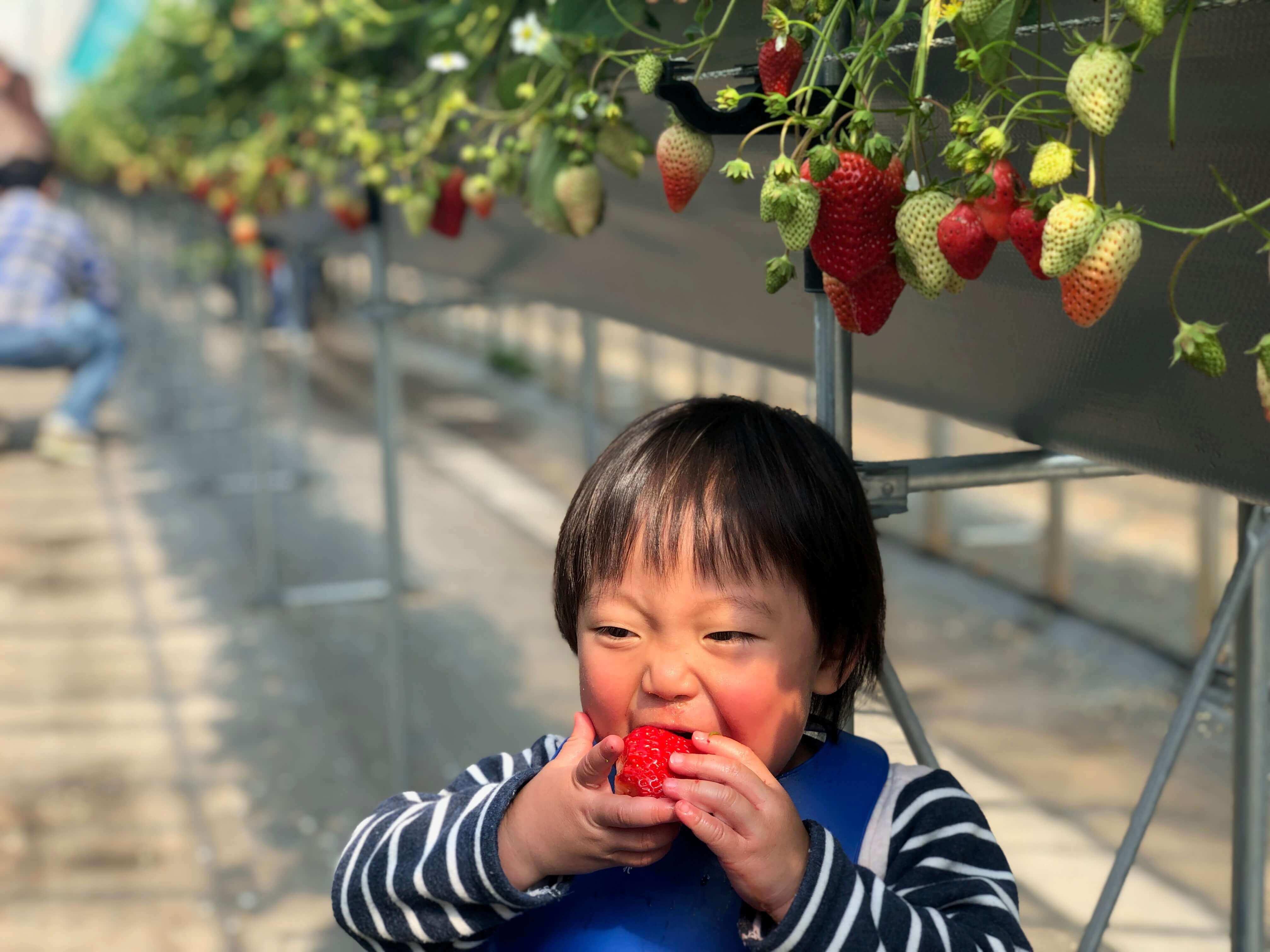 子どもには大きすぎるイチゴ